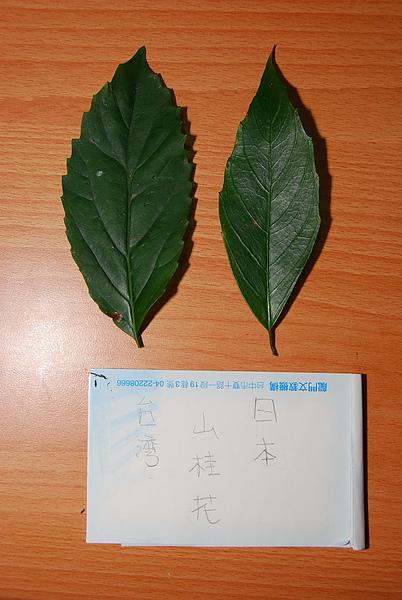20101229-30_台中八仙山-小毛-33_調整大小.jpg