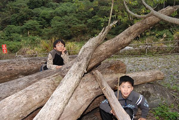 20110124-26_台中八仙山_小毛-188_調整大小.jpg