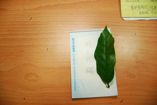 20101229-30_台中八仙山-小毛-70_調整大小.jpg