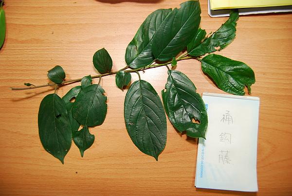 20101229-30_台中八仙山-小毛-67_調整大小.jpg