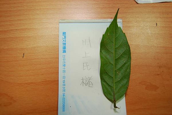 20101229-30_台中八仙山-小毛-71_調整大小.jpg