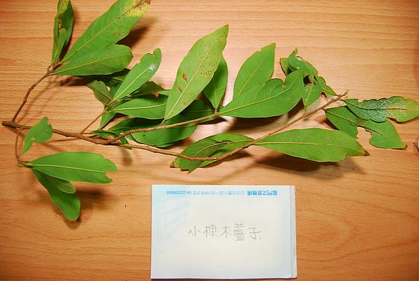 20101229-30_台中八仙山-小毛-52_調整大小.jpg