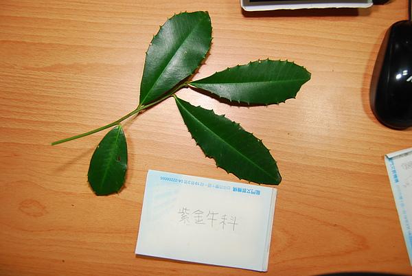 20101229-30_台中八仙山-小毛-48_調整大小.jpg