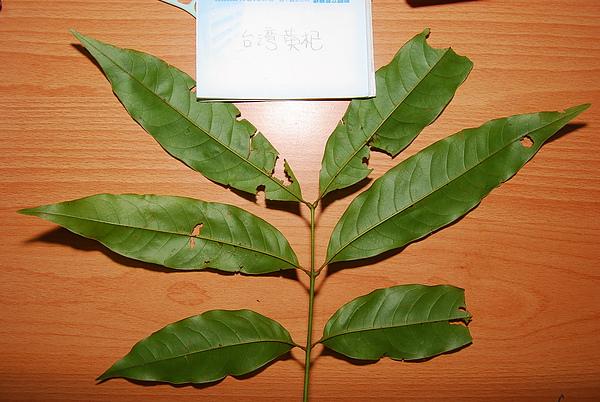 20101229-30_台中八仙山-小毛-36_調整大小.jpg