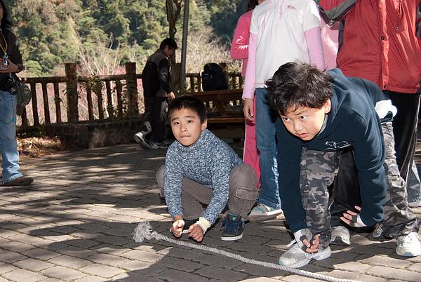 20110124-26_台中八仙山_小毛-40_調整大小.jpg