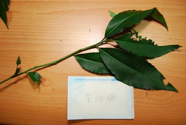 20101229-30_台中八仙山-小毛-63_調整大小.jpg
