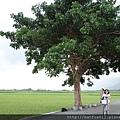 金城武大樹