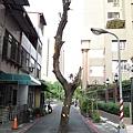 1375943128-柏油路上的樹