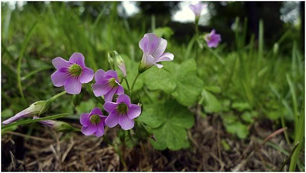 紫色花-01.jpg