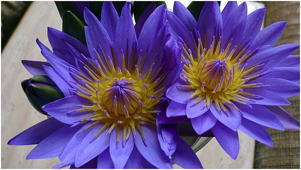 紫色花-02.jpg