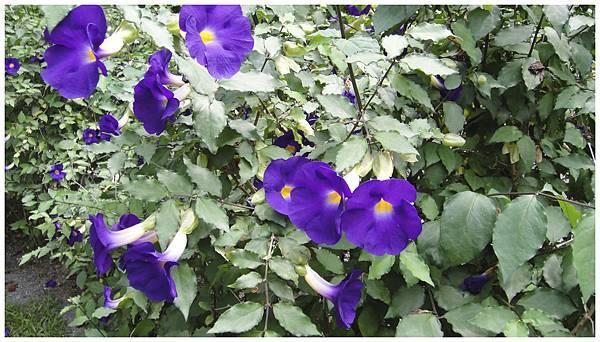 紫色花-03.jpg