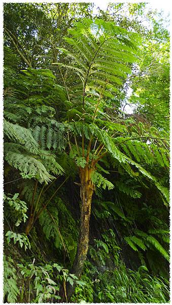 植物01.jpg