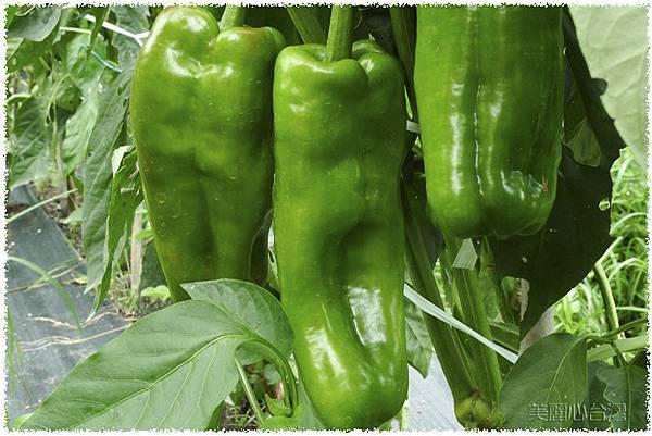 有機蔬菜01.jpg