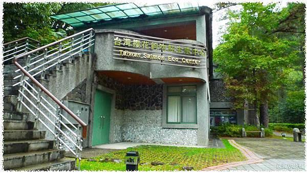 台灣櫻花鉤吻鮭生態中心01