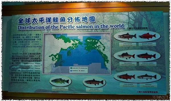 台灣櫻花鉤吻鮭生態中心03