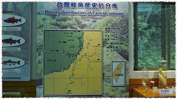 台灣櫻花鉤吻鮭生態中心06
