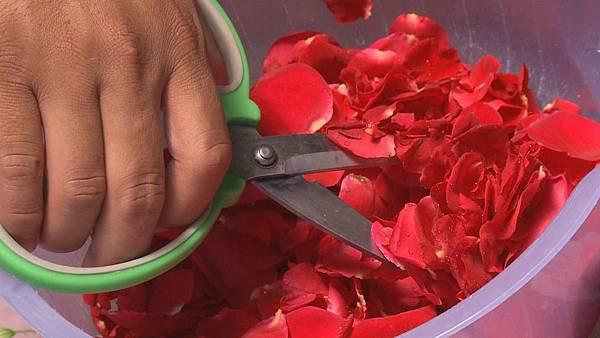 農場主人章思廣熟練快速的把花瓣剪成碎片  這是製作玫瑰花醬的第一個步驟