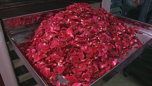 這些自家栽種的有機玫瑰花   有三成製作成乾燥玫瑰花瓣  七成被做成玫瑰花醬