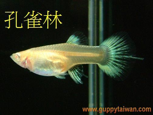 粉紅白黃尾禮服--母(燕基).JPG