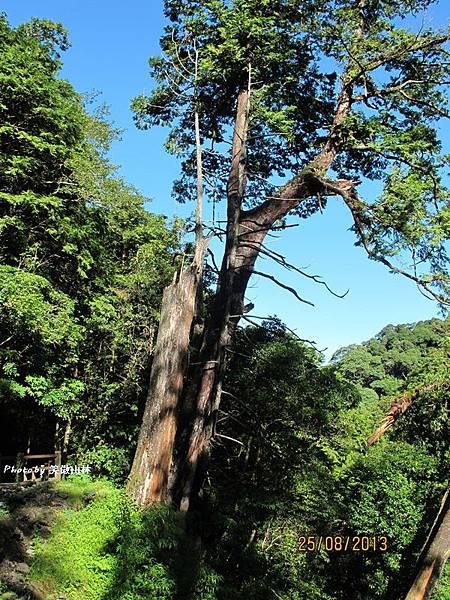 102-08-25 第一露 拉拉山夢想家 (254).JPG