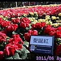 IMG_9154.jpg