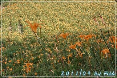 IMG_3379.jpg