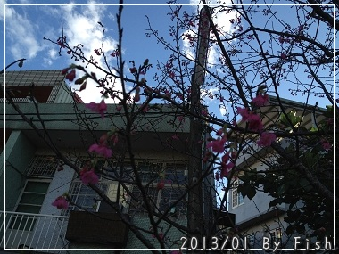 IMG_4902