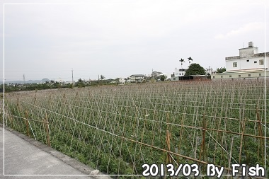 IMG_0879