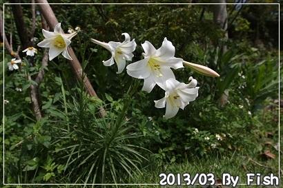 IMG_1395