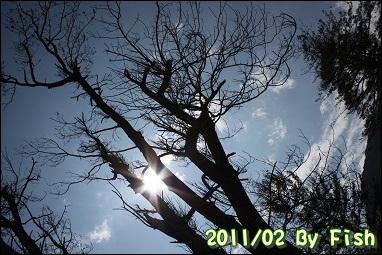 IMG_1315.jpg