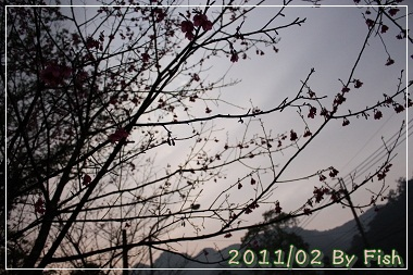 IMG_1029.jpg
