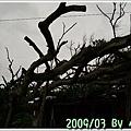 2009_03_28~29_花蓮【住海邊】民宿_133.jpg