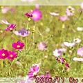 2008_11_22~23_研究所班遊(新社花海˙溪頭)_004.jpg