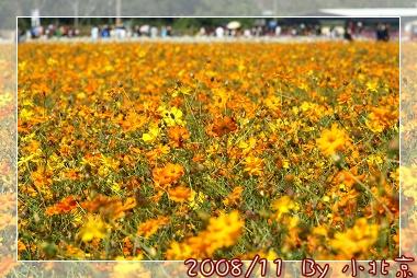 2008_11_22~23_研究所班遊(新社花海˙溪頭)_008.jpg
