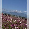 2008_11_22~23_研究所班遊(新社花海˙溪頭)_019.jpg