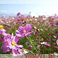 2008_11_22~23_研究所班遊(新社花海˙溪頭)_033.jpg