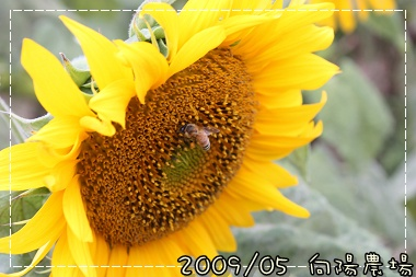 image1779.jpg