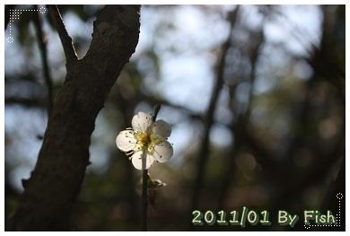 IMG_0607.jpg