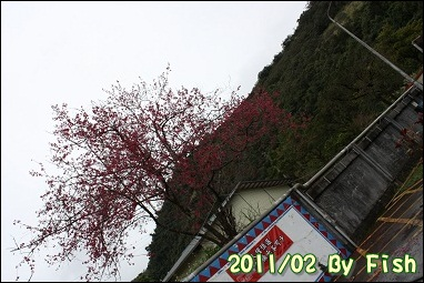 IMG_1087.jpg