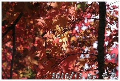 nEO_IMG_IMG_7504.jpg