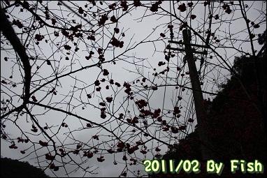 IMG_1126.jpg