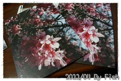 IMG_9586.jpg
