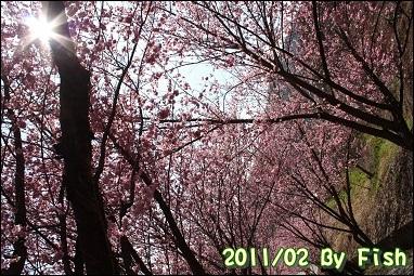 IMG_1265.jpg