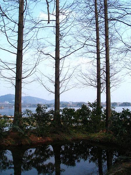 西湖,楊公堤