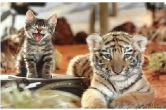 以為自己是虎ㄉ貓.jpg