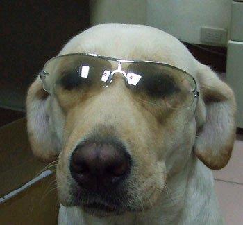 戴眼鏡之可魯.bmp