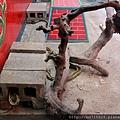五福宮「使者公蛇洞」有許多錦蛇,亦稱神蛇