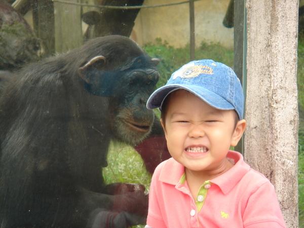 猩猩是我的好朋友