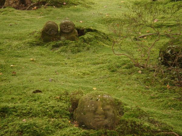 思芸阿姨說三千院的苔類很特別喔