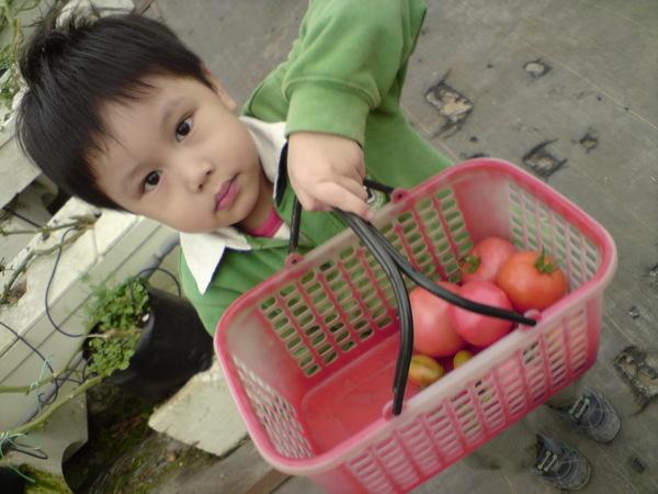 看我採的蕃茄